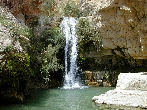 En Gedi Nahal David waterfall, tb n040900